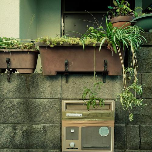 Spider Planter Mailbox