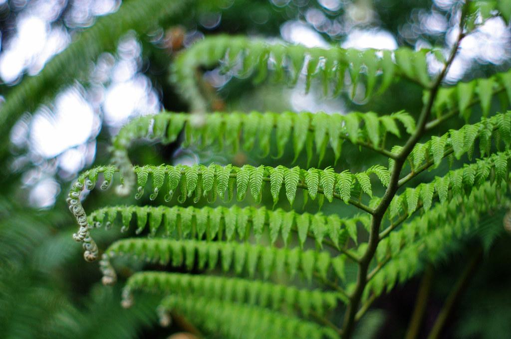 初訪台北植物園
