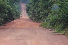 Guyana-9226