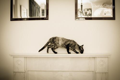 bojack horseman cat