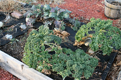 winter gardens 057