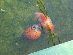 水元公園20111205-034