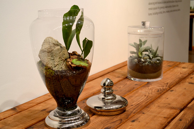 An apothecary jar containing a staghorn fern is one of 26 terrariums created by Jennifer Williams and on exhibit at Brooklyn Botanic Garden. Photo by Elizabeth Peters.
