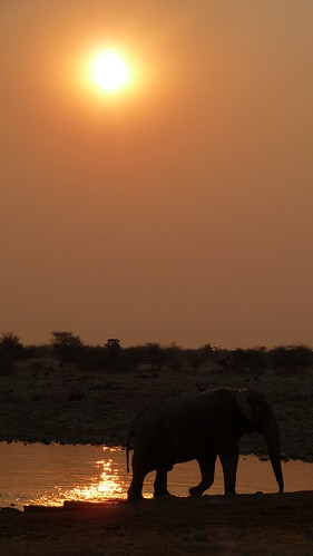 Sunset at the watering hole