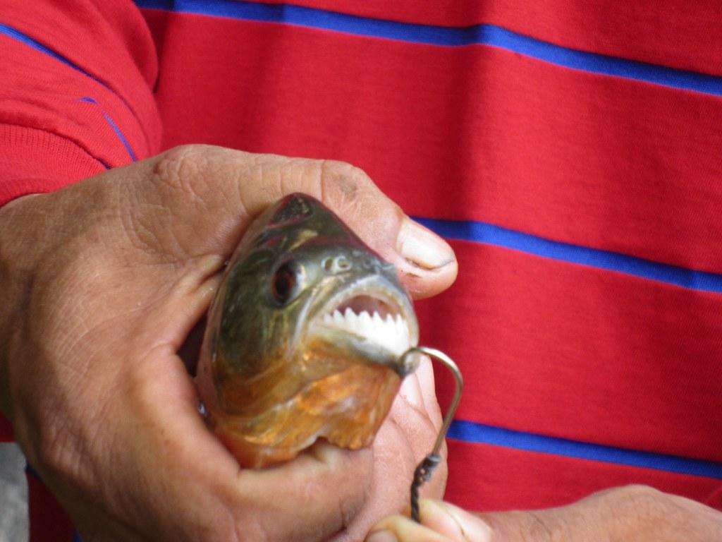 1st catch! Piranha for dinner