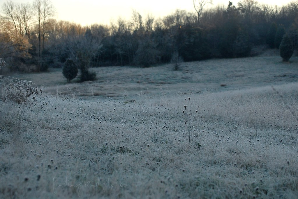 frosty morning field seed pods