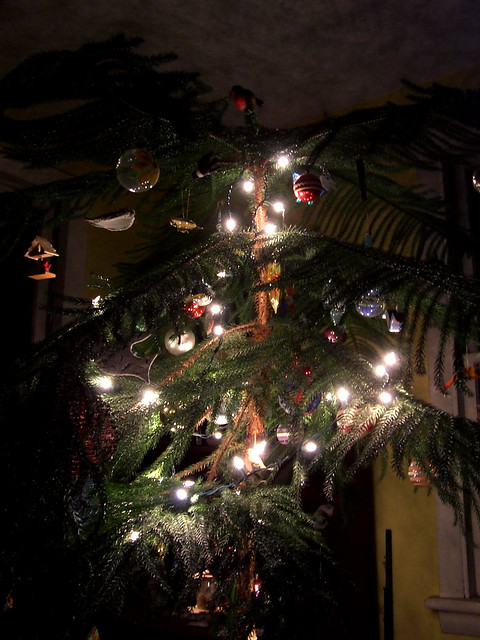 solstice tree 2