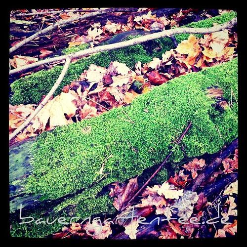 Herbstgruß[20111213]