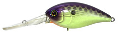 JP Purple Chartreuse Muscle