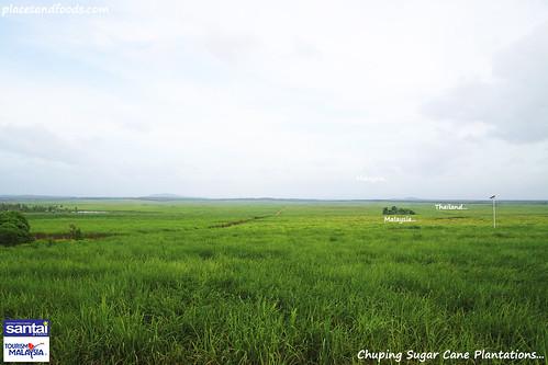 chuping sugar cane plantation1