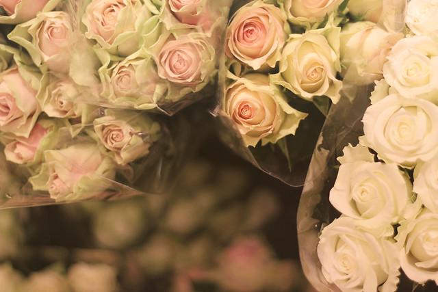 hvite roser # 22