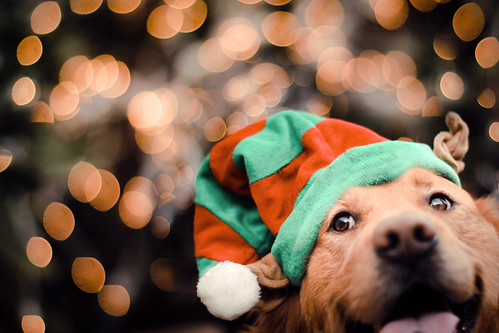 Santa's Little Helper: The Elf Retriever