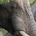 Elephant portrait by ~lusted~