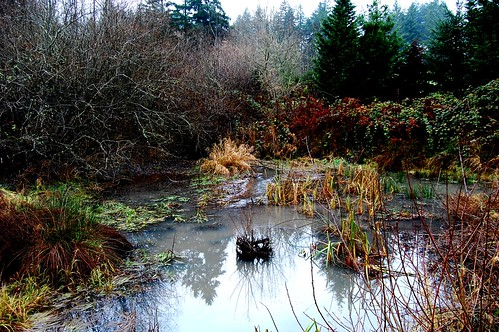 local wetland