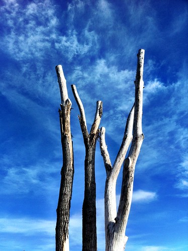 365/365  - Bare Trees by Diane Meade-Tibbetts