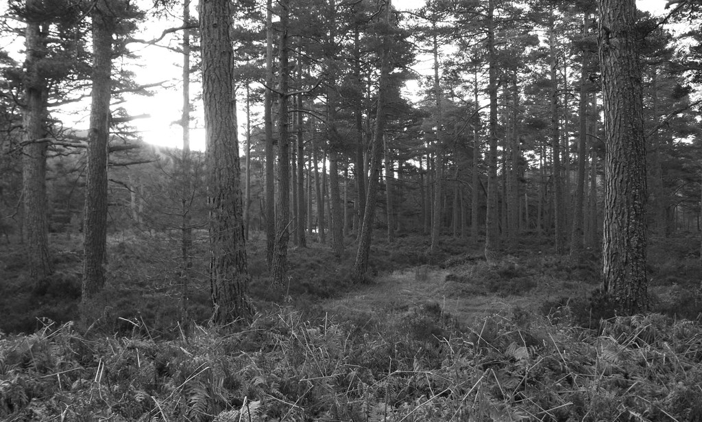Forest of Glen Tanar