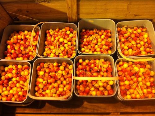 白櫻桃-紐西蘭櫻桃