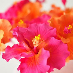 Orange and hot pink flowers