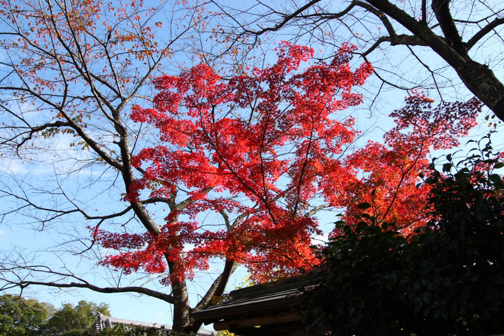 Kyoto Arashiyama tourist guide (21)