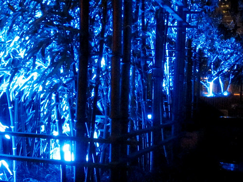 Trees with Blue Lights