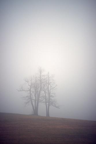 trees mist field fog rural landscape nebel scenic northcarolina