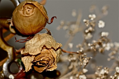 Miss Havisham's Roses 02