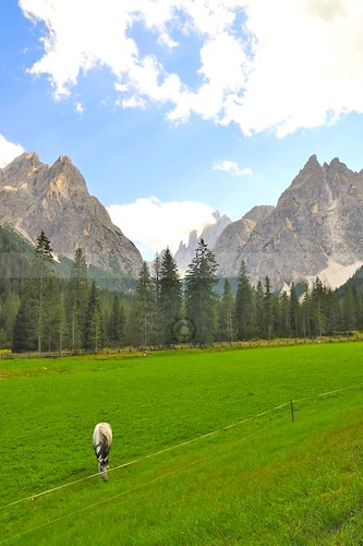 blue trees horse mountains green alberi clouds montagne prato dolomites dolomiti altoadige valfiscalina fischleintal blinkagain