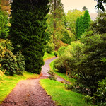 Pleasant Path. Benmore Botanical Garden, Scotland (Explored)