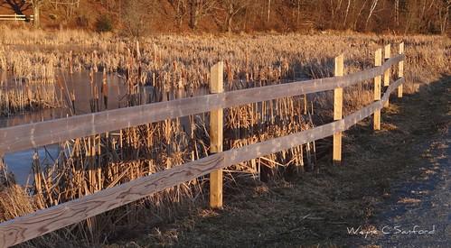 sunset water fence frozen novascotia cattails annapolisvalley kentville minersmarsh