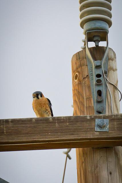 birdofprey3