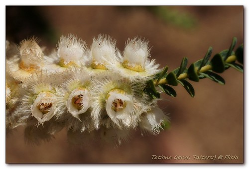 Feather flowers macro by Tatters:)