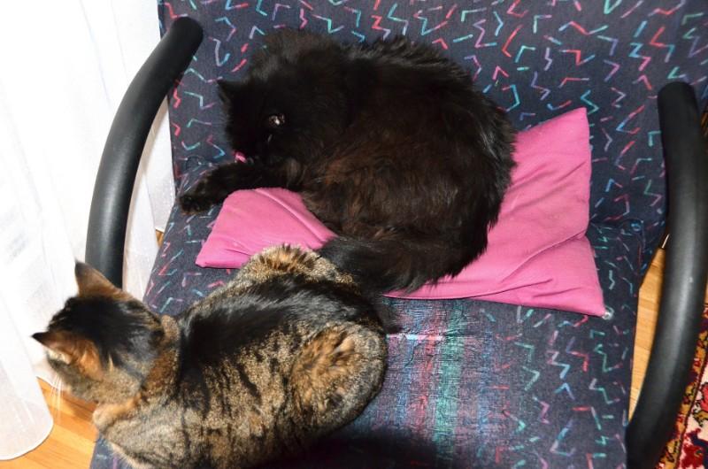 Tabby and Nera