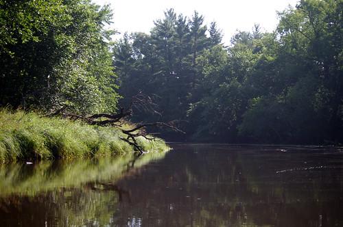 morning trees summer reflection nature water wisconsin river landscape woods peaceful mauston lemonweir juneaucounty