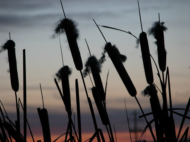 Reeds by DuncanSmith Photography