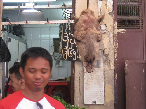 Camel head in Morocco