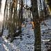 La luce del bosco (Val Curone, Provincia di Alessandria, Piemonte)