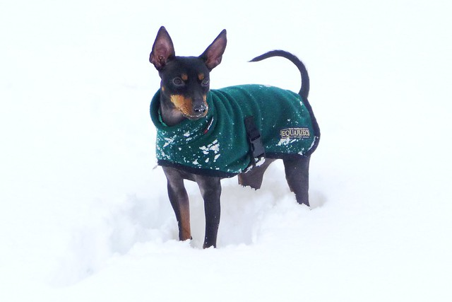 Draco in the Snow