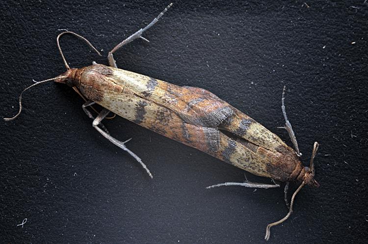 afficher le sujet le test du papillon corr mite alimentaire le naturaliste. Black Bedroom Furniture Sets. Home Design Ideas