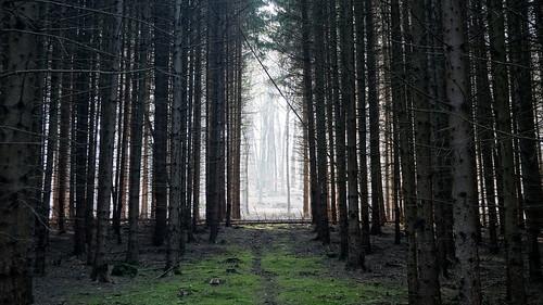 wood nature forest gate hungary magyarország erdő szentgotthárd őrség máriaújfalu hársastó flickrandroidapp:filter=none