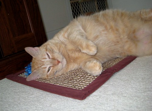 A relaxed orange cat lays on a mat.