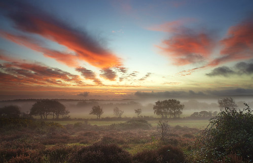 Wytch Heath near Arne, Dorset, UK