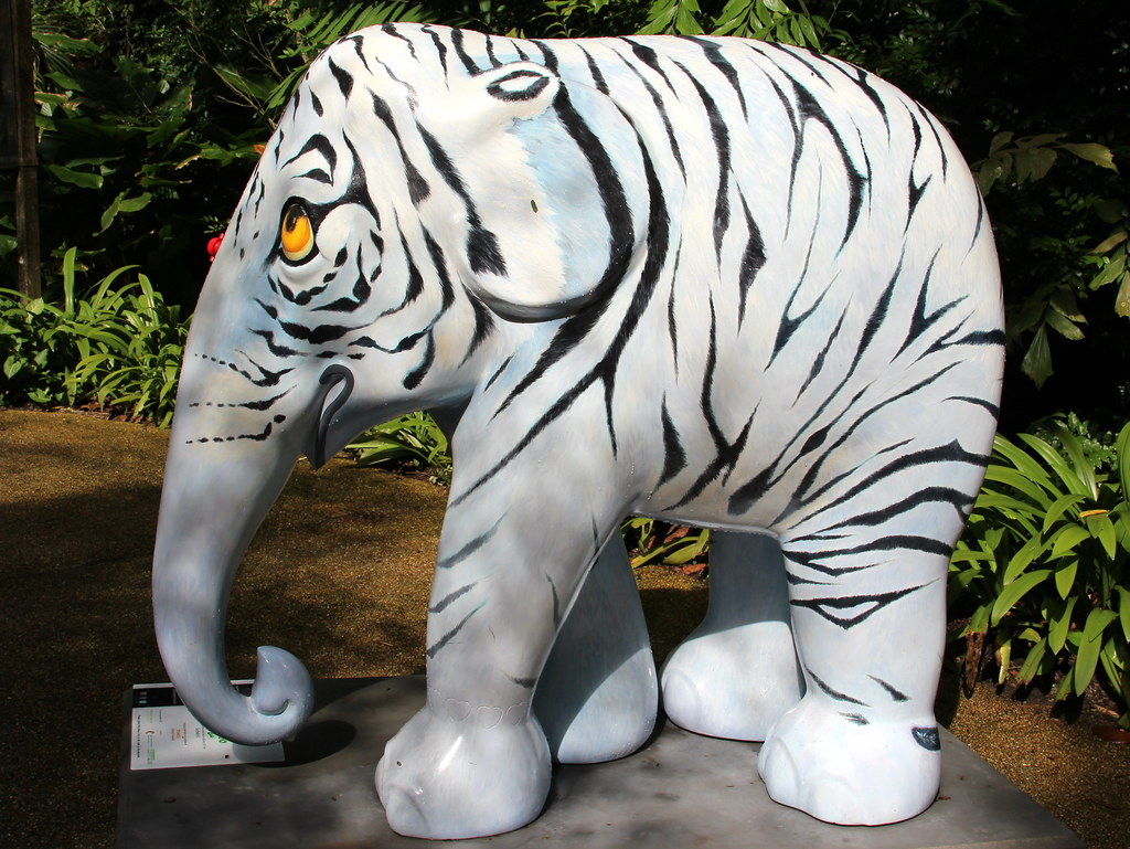 No25_WHITE TIGER