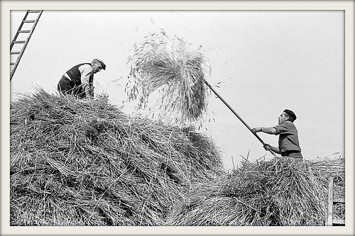 Grandfather and uncle storing the summer's hay