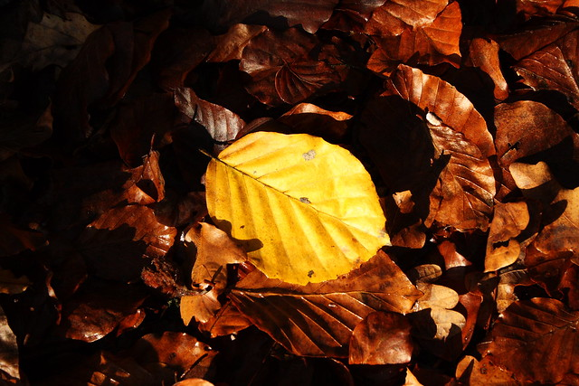 Yellow leaf of the family