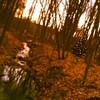 Lone tree #xmas #kelvin #tiltshift