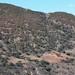 Forest and old fields - Bosque y campos de siembra cerca de Santa María Yolotepec (al sur de Chalcatongo, Región Mixteca), Oaxaca, Mexico por Lon&Queta