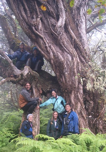 The October Banding Group in front of a very old ʻŌhiʻa Lehua tree in The Nature Conservancy's Waikamoi Preserve.