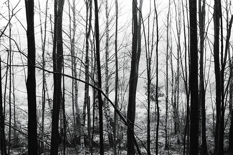 randiga träd