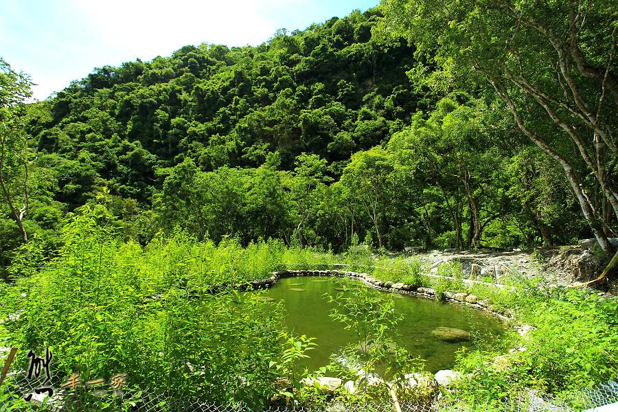 蝴蝶谷|台東延平鄉景點