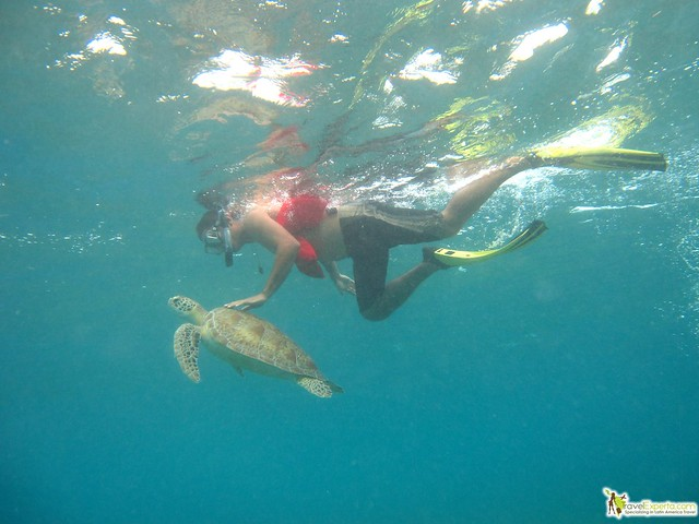 Where To Find Sea Turtle Tours in Costa Rica